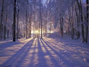 Peaceful Winter- Rachael Dymski