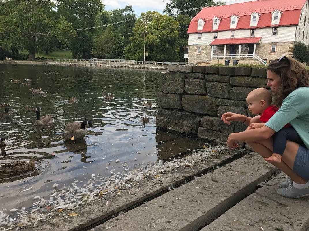 ducks jb